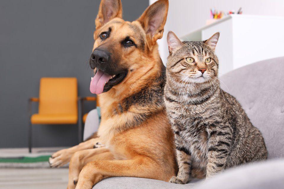 Love Like a Dog & Live Like a Cat